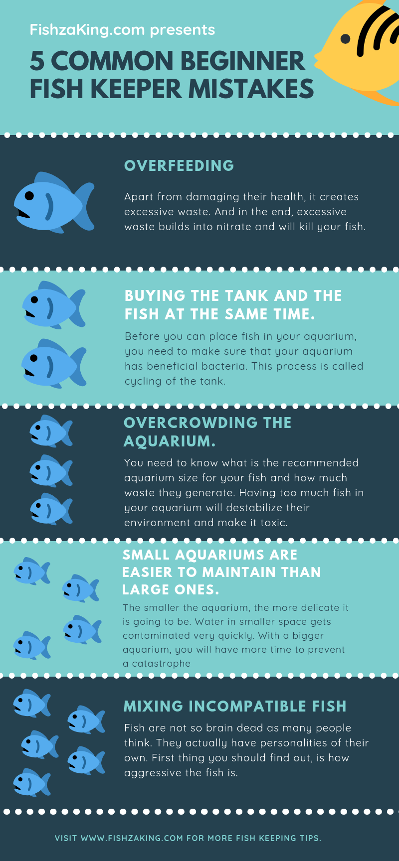 Beginner fish keeping mistakes infographic