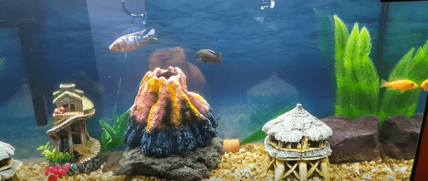 Aquarium decorations theme