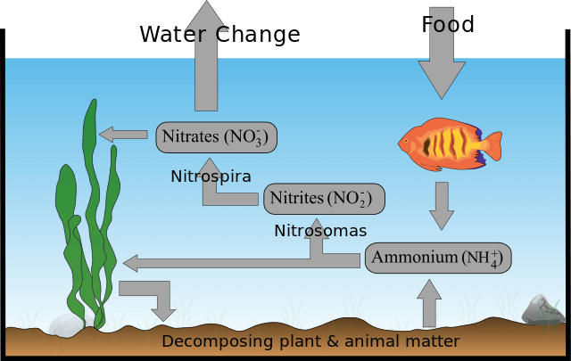 Nitrogen cycle graphic